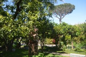 Garten mit Schirmpinie und verschiedenen Pflanzen