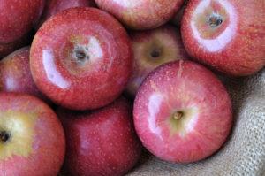 Aussehen des Annurca Apfels