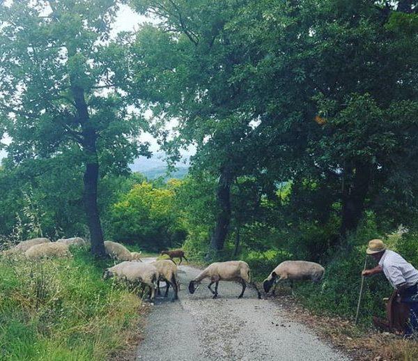 Agriturismen in Kampanien
